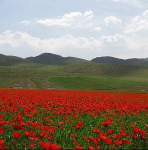 Bajgiran Border Town; The Land of Poppies