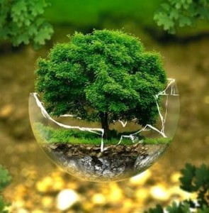 Tehran Municipality implementing environmental scheme