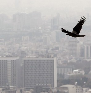 Air pollution leading contributor to NCDs