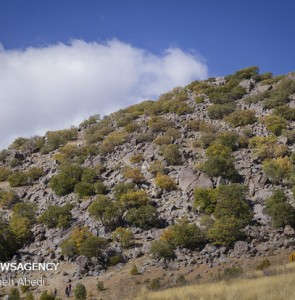 $120m earmarked to implement Zagros forest protection plan